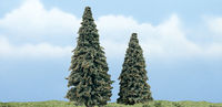 Conifer - Image 1
